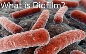 Biofilm Treatment Orlando