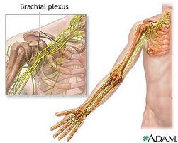 Brachial Plexux Thoracic Outlet Neck Pain Orlando