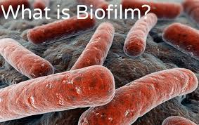 Biofilm Treatment Orlando